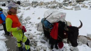 Andy und Wolfi begegnen einem Yak