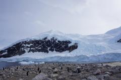 Eine Pinguinkolonie (Thomas Andreas Beck)