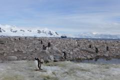 Die Pinguine sind neugierig (Andreas Unterkreuter)