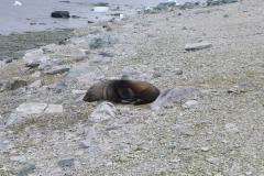 Robbe beim Mittagsschlaf (Andreas Unterkreuter)