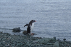 Ein Pinguin am Strand (Andreas Unterkreuter)