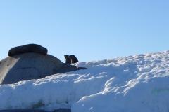 Die Robben geniessen ein Sonnenbad (Andreas Unterkreuter)