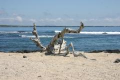 Seefahrerstimmung in den Weiten des Pazifik auf den Galapagos-Inseln (Foto: Patrick Lamp)