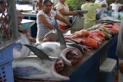 Fischmarkt auf Galapagos (Foto: Patrick Lamp)