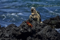 Leguane leben auf der Insel (Foto: LIFE EARTH Reisen)