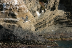 Diese Pelikane sind hier zu Hause (Foto: Patrick Lamp)