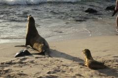 Seelöwe mit Nachwuchs (Foto: Sabine Holzer)