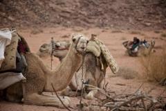 Unsere Kamele müssen rasten (Foto: Daniel Kopp)