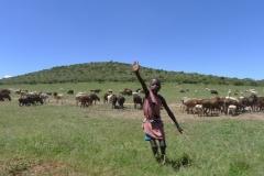 Junge hütet Viehherde (Foto: Sabine Holzer)