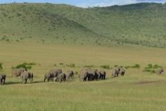 Elefantenherde (Foto: Sabine Holzer)