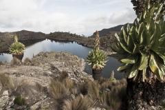 Landschaft - Blick auf den Lake (Foto: Andreas Scharnagl)