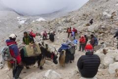 Unsere Gruppe mit Sherpas und Yaks auf dem Weg zum Basislager (Foto: Wolfgang Klocker)